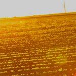 Compra de produtor rural: como funciona?